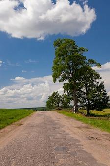 Droga asfaltowa - mała asfaltowa droga znajdująca się na terenach wiejskich.