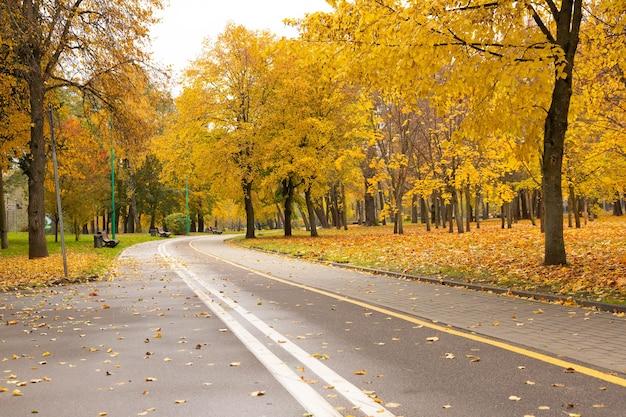 Droga dla pieszych i rowerów w jesiennym parku