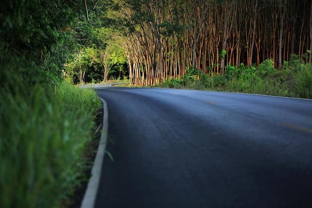Droga do ciemnego drzewnego tunelu, wiejska droga z drzewnym tunelem