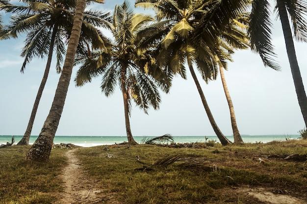 Droga do morza. wysokie palmy na wyspie na tle plaży. ścieżka przez gaj palmowy