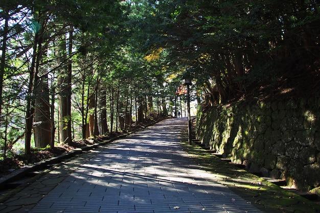 Droga do świątyni tosho gu na jesieni, nikko, japonia