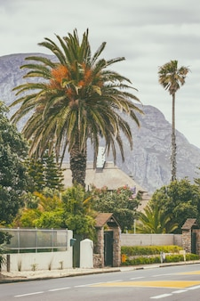 Droga, drzewka palmowe i góry w tle w hermanus, południowa afryka