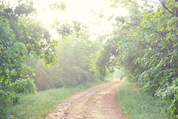 Droga gruntowa w lesie wiosną, latem filtr