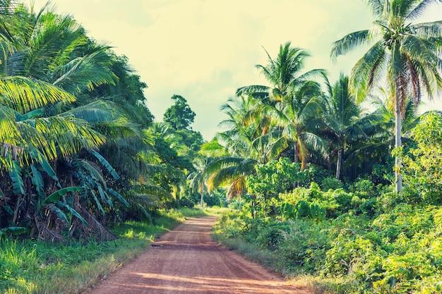 Droga gruntowa w odległej dżungli