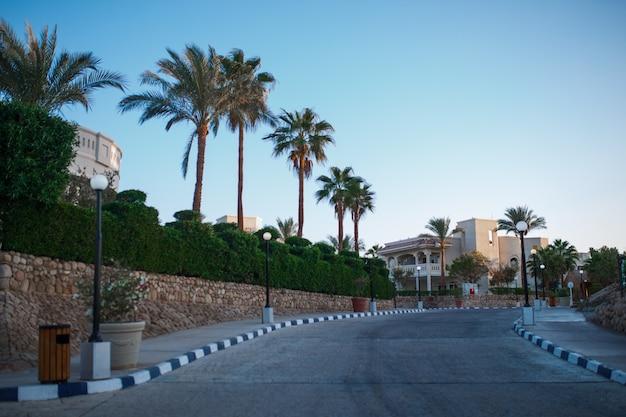 Droga i po bokach palm wspaniały krajobraz egiptu