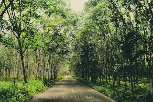 Droga krajowa w tajlandii droga między plantacją kauczuku