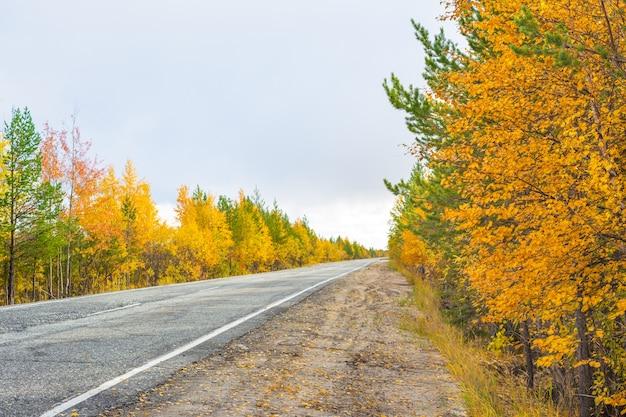 Droga, las mieszany z drzewami o żółtych liściach i zielonymi sosnami jesienią