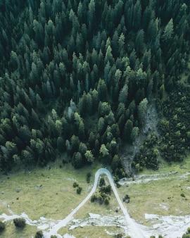 Droga leśna i w kształcie litery v.