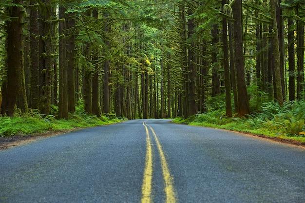 Droga leśna mossy