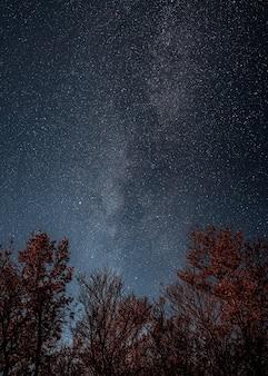 Droga mleczna na rozgwieżdżonym niebie nad koronami drzew