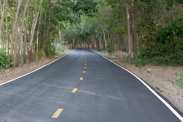 Droga na plantacji kauczuku