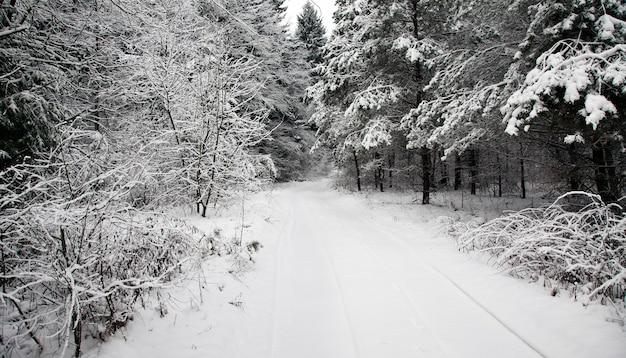 Droga nieutwardzona położona w lesie w sezonie zimowym.