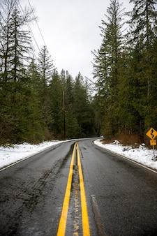 Droga otoczona zielonymi liśćmi drzew
