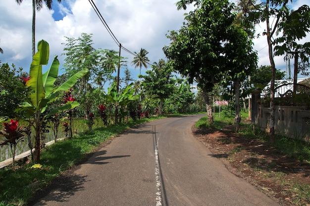 Droga po polach ryżowych w wiosce indonezji
