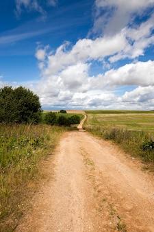 Droga, położona na wsi w sezonie wiosenno-letnim