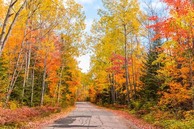 Droga przez drewno z jesień kolorowym ulistnieniem w kanada