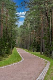 Droga przez las sosnowy latem w pobliżu miejsca spoczynku. leśna droga