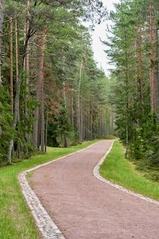 Droga przez las sosnowy latem w pobliżu miejsca spoczynku