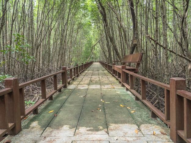Droga Spacerowa Wraz Z Drzewem Mangrowym. Premium Zdjęcia