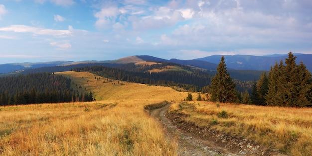 Droga w górskiej dolinie w pobliżu lasu sosnowego