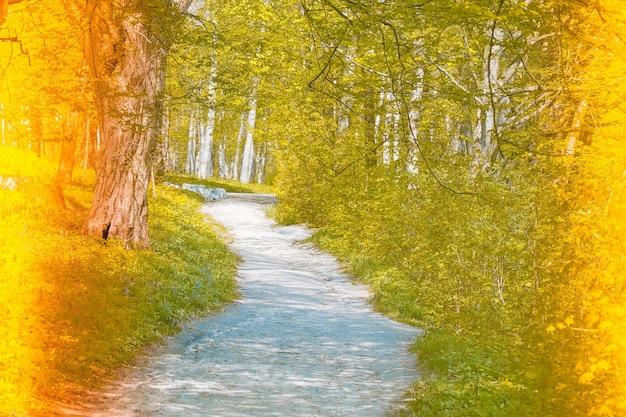 Droga w lesie, filtr i tonowanie po obu stronach obrazu na żółto