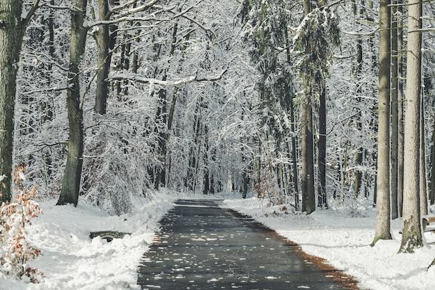 Droga w lesie na zimowy dzień