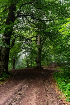 Droga w letnim lesie