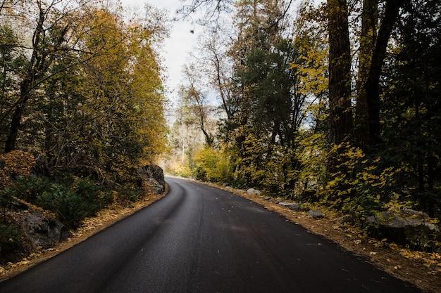 Droga w parku narodowym yosemite w kalifornii, usa