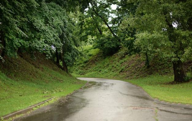 Droga w parku zielona po deszczu