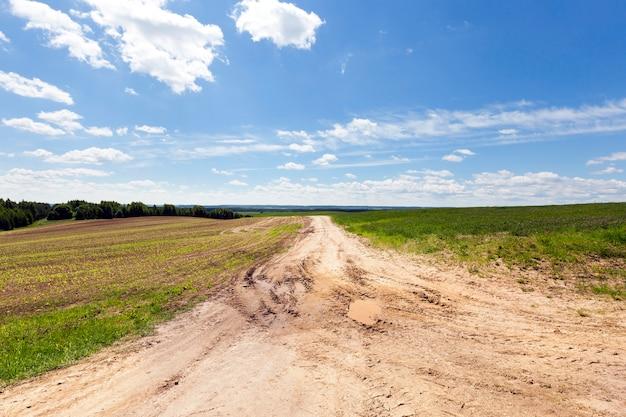 Droga w polu bez asfaltu, pokryta piaskiem dla ruchu rolniczego, krajobraz letni lub wiosenny