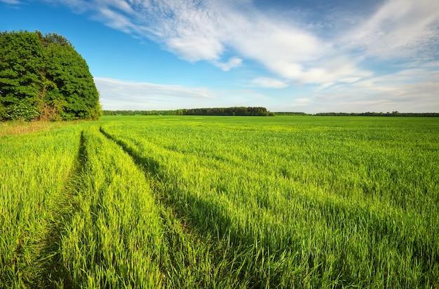 Droga w zielonym polu i błękitne niebo z chmurami
