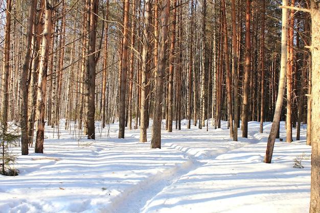 Droga w zimowym lesie.