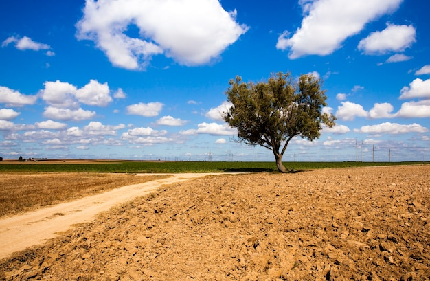 Droga wiejska - droga wiejska nie asfaltowa, która przebiega przez pole
