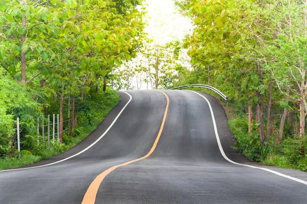 Droga wiejska z drzewami po obu stronach, zakręt jezdni