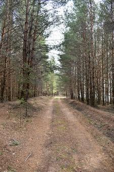 Droga wśród sosnowego lasu
