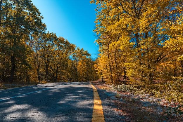 Droga wśród żółtego jesiennego górskiego lasu