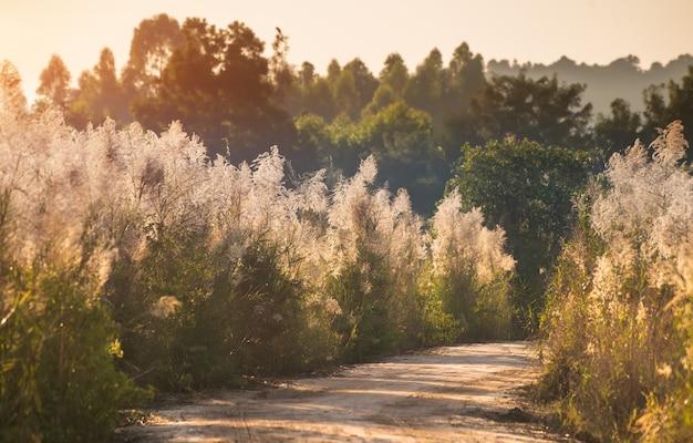 Droga z boku drzewa w sezonie jesiennym.