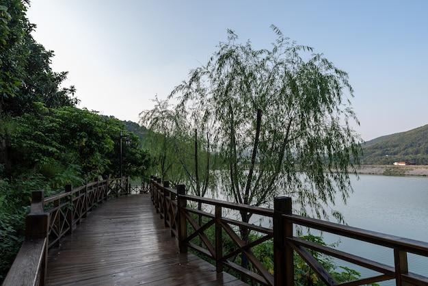 Droga z desek w wiejskim parku jest wysadzana zielonymi drzewami