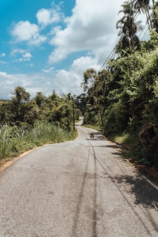 Droga z lasem tropikalnym w brazylii
