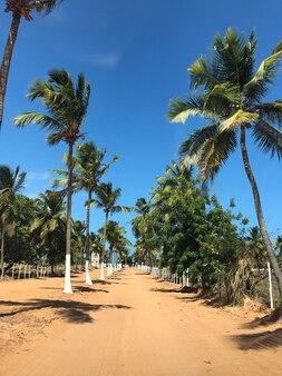 Droga z palmami kokosowymi po bokach