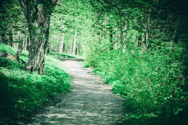 Droga z ziemi w lesie w słoneczny letni dzień, zielony filtr