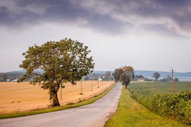 Droga znajduje się na środku pola, na którym dojrzewa pszenica. wiejski krajobraz z widokiem na pole pszenicy z ciemnymi chmurami