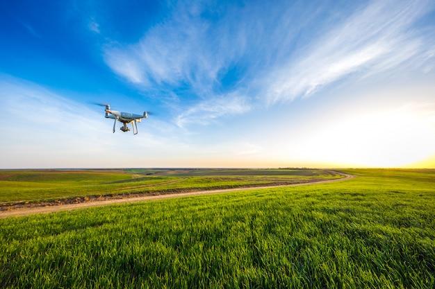 Drone quad copter na zielonym polu kukurydzy