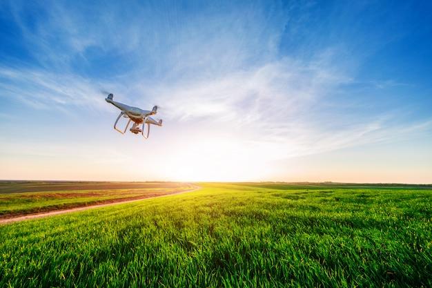 Drone quad copter na żółtym polu kukurydzy