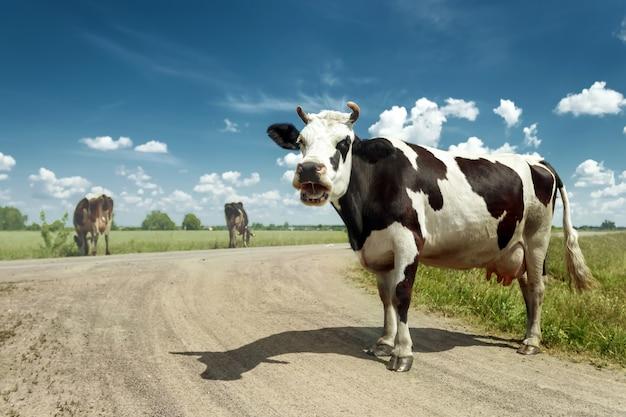 Dropiaty krowy pasące się na pięknej zielonej łące na tle błękitnego nieba.
