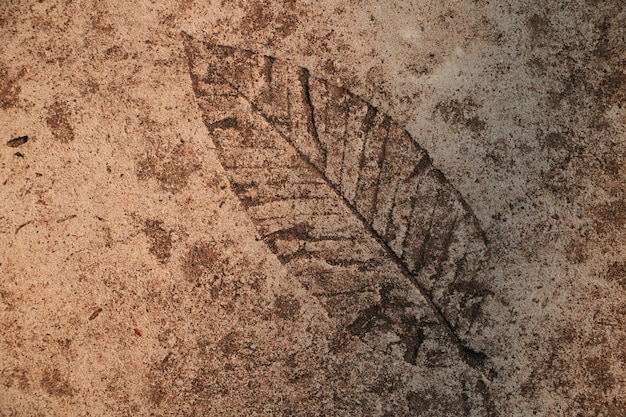 Druk liści na posadzce cementowej