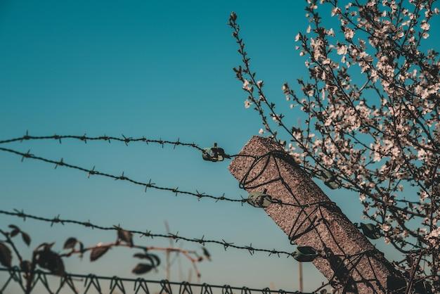 Drut kolczasty przeciw niebieskiemu niebu