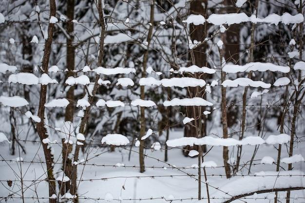 Drut kolczasty w śniegu