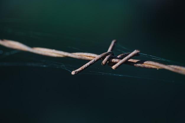 Drut kolczasty z bliska na zewnątrz i pajęczyna