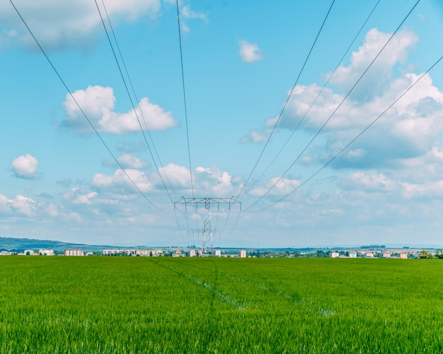 Druty wysokiego napięcia nad polem z roślinami rolnymi